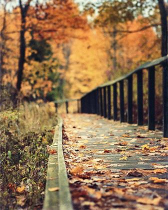 paseo-hojas